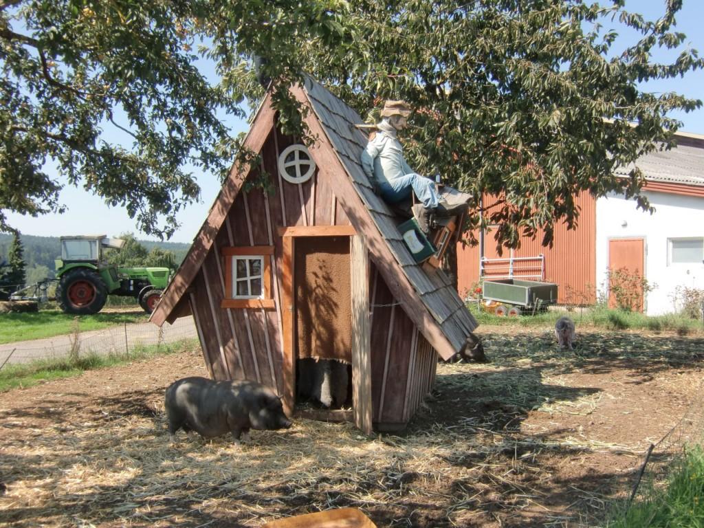 Abb.7: waren die Schweine noch recht manierlich, so hatte der Kuhstall im Hintergrund mehr für die Nase zu bieten (Foto: Volker Duda)